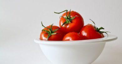 Culture tomate sous serre : comment ça marche ?