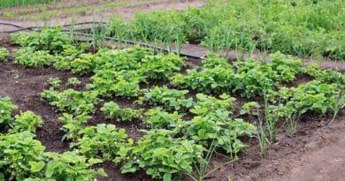 Comment créer un potager 100% bio ?