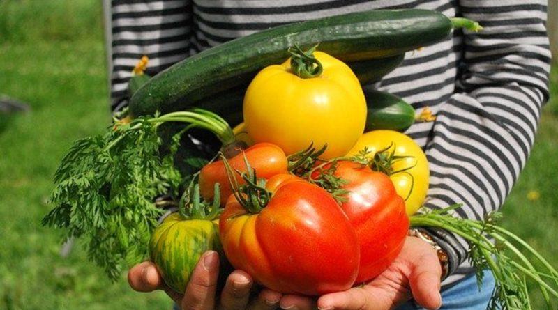 Quels légumes cultiver dans son potager en été ?